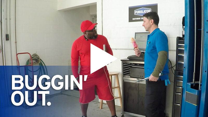Video: Buggin' Out